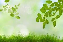 Η ηλιόλουστη ημέρα ομορφιάς στο δάσος, αφαιρεί τα φυσικά υπόβαθρα στοκ εικόνες