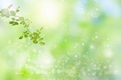 Η ηλιόλουστη ημέρα ομορφιάς στο δάσος, αφαιρεί τα φυσικά υπόβαθρα ελεύθερη απεικόνιση δικαιώματος