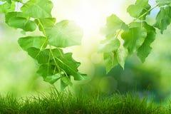 Η ηλιόλουστη ημέρα ομορφιάς στο δάσος, αφαιρεί τα φυσικά υπόβαθρα Στοκ Φωτογραφίες