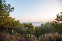 Η θάλασσα πίσω από τα δέντρα, κοντά στη θάλασσα στοκ εικόνες