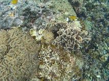 Η θάλασσα †‹â€ ‹Ταϊλάνδη, θάλασσα anemones είναι θάλασσα Στοκ φωτογραφίες με δικαίωμα ελεύθερης χρήσης
