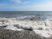 Η θάλασσα έφερε στην ακτή ένα δέντρο στοκ εικόνες