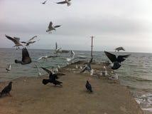 Η θάλασσα και seagull Στοκ εικόνα με δικαίωμα ελεύθερης χρήσης