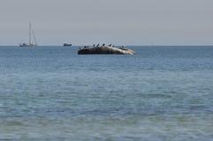 Η θάλασσα της Βαλτικής, πλέοντας βάρκα στοκ εικόνα