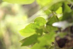 Η θαμπάδα βγάζει φύλλα στοκ εικόνες