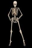 Η θηλυκή μόδα σκελετών θέτει με το ψαλίδισμα της πορείας Στοκ Εικόνα