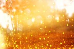 Η θολωμένη αφηρημένη φωτογραφία της ελαφριάς έκρηξης μεταξύ των δέντρων και ακτινοβολεί πηγαίνει Στοκ Εικόνα