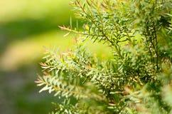 Η θολωμένη εστίαση του πράσινων φύλλου και των δέντρων στο χαριτωμένο κατώφλι στην ηλιόλουστη ημέρα στοκ φωτογραφία με δικαίωμα ελεύθερης χρήσης