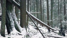 Η διάβαση πεσμένος συνδέεται το χιονώδες χειμερινό δάσος φιλμ μικρού μήκους