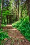 Η διάβαση σε ένα δάσος ανεβαίνει στοκ εικόνες