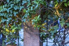 Ηλιακοί διακοσμητικοί λαμπτήρες σε έναν κήπο νύχτας Στοκ Εικόνες