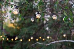 Η διακοσμητική ηλεκτρική γιρλάντα των βολβών φωτισμού κρεμά μεταξύ του δέντρου β Στοκ Εικόνες
