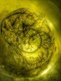 «Ηλιακό νεφέλωμα» Στοκ φωτογραφίες με δικαίωμα ελεύθερης χρήσης