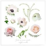 Η διανυσματική συλλογή λουλουδιών στοιχείων του ρόδινου άσπρου κήπου αυξήθηκε και Στοκ Εικόνες