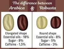 Η διαφορά μεταξύ Arabica και Robusta Στοκ φωτογραφία με δικαίωμα ελεύθερης χρήσης