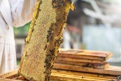 Η διαδικασία το μέλι, που αυξάνει το μέλι κεριών από την κυψέλη Στοκ Εικόνες
