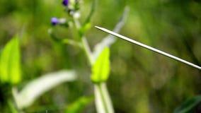 Η λιβελλούλη παίρνει μαζί σε ένα φύλλο απόθεμα βίντεο