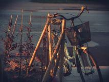 Ηλικίας ποδήλατο ηλικιωμένων κυριών στο φως πρωινού Στοκ εικόνα με δικαίωμα ελεύθερης χρήσης