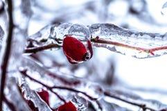 Ηλικία πάγου Στοκ εικόνα με δικαίωμα ελεύθερης χρήσης