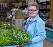 Ηλικιωμένη ερείκη αγοράς γυναικών στο κατάστημα κήπων Στοκ φωτογραφία με δικαίωμα ελεύθερης χρήσης