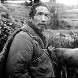 ηλικιωμένοι & βοοειδή  Στοκ Εικόνα