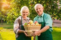Ηλικιωμένο καλάθι μήλων εκμετάλλευσης ζευγών Στοκ εικόνες με δικαίωμα ελεύθερης χρήσης