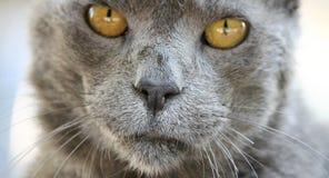 Ηλικιωμένο πορτρέτο γατών Στοκ Φωτογραφίες