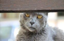 Ηλικιωμένο πορτρέτο γατών Στοκ εικόνα με δικαίωμα ελεύθερης χρήσης