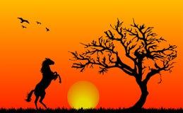 Ηλιοβασίλεμα - άλογο στη φύση απεικόνιση αποθεμάτων