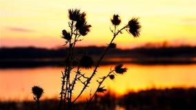 Ηλιοβασίλεμα αγκαθιών φιλμ μικρού μήκους