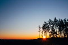Ηλιοβασίλεμα, ανατολή στο δασικό φωτεινό ζωηρόχρωμο δραματικό ουρανό πεύκων και σκοτεινό έδαφος Στοκ φωτογραφίες με δικαίωμα ελεύθερης χρήσης