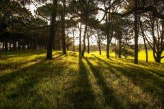 Φως του ήλιου στο πράσινο δάσος, χρόνος άνοιξη Στοκ Εικόνες