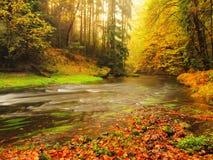Ηλιοβασίλεμα επάνω από τον ποταμό βουνών που καλύπτεται από τα πορτοκαλιά φύλλα οξιών Κλάδοι Bended ανωτέρω - νερό Στοκ εικόνα με δικαίωμα ελεύθερης χρήσης