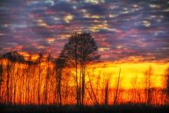 Ηλιοβασίλεμα ελών Στοκ Εικόνα