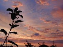 Ηλιοβασίλεμα θερινού βραδιού Στοκ Εικόνες