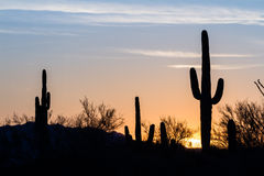 Ηλιοβασίλεμα κάκτων Saguaro Στοκ εικόνες με δικαίωμα ελεύθερης χρήσης