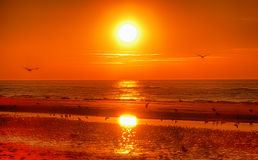 Ηλιοβασίλεμα και πουλιά Στοκ Εικόνες