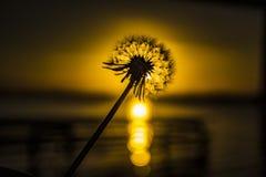 Ηλιοβασίλεμα και το λουλούδι Στοκ Φωτογραφίες
