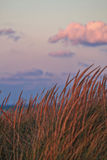 Ηλιοβασίλεμα κατά μήκος της όμορφης παραλίας του Μίτσιγκαν λιμνών με την άποψη του ορίζοντα του Σικάγου στο μακρινό υπόβαθρο Στοκ Φωτογραφία