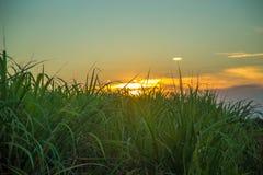 Ηλιοβασίλεμα καλάμων ζάχαρης Στοκ Εικόνες