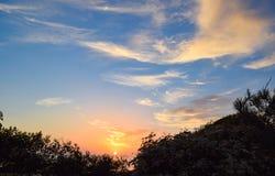 Ηλιοβασίλεμα μέσω της βούρτσας στην κρατική επιφύλαξη πεύκων Torrey στο Σαν Ντιέγκο Στοκ Φωτογραφίες