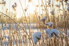 Ηλιοβασίλεμα μέσω των εγκαταστάσεων Στοκ Φωτογραφίες