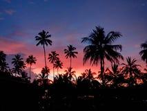 Ηλιοβασίλεμα μέσω των φοινίκων, Σρι Λάνκα Στοκ εικόνες με δικαίωμα ελεύθερης χρήσης