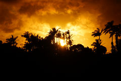 Ηλιοβασίλεμα μετά από την τροπική σκιαγραφία των δέντρων Στοκ Φωτογραφία