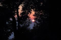 Ηλιοβασίλεμα με ένα φύλλο του δέντρου στον ήλιο Στοκ εικόνες με δικαίωμα ελεύθερης χρήσης