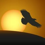 Ηλιοβασίλεμα με μια σκιαγραφία ενός αετού επίσης corel σύρετε το διάνυσμα απεικόνισης διανυσματική απεικόνιση