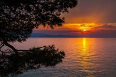 Ηλιοβασίλεμα με τα δέντρα πεύκων σε Brela Στοκ φωτογραφίες με δικαίωμα ελεύθερης χρήσης