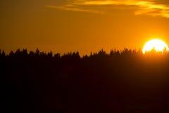 Ηλιοβασίλεμα με τη δασική σκιαγραφία Στοκ Φωτογραφία