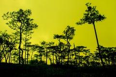 Ηλιοβασίλεμα με τη σκιαγραφία μαύρων πευκών στοκ εικόνα