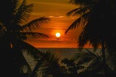 Ηλιοβασίλεμα με τη σκιαγραφία φοινίκων Στοκ Εικόνα
